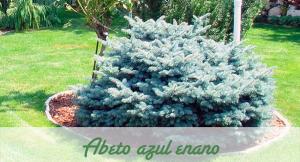 Las mejores con feras para tu jard n vivero en onil for Tipos de pinos para jardin fotos