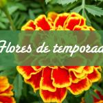 Flores de temporada
