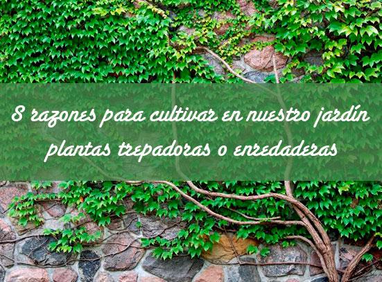 Plantas trepadoras para muros flores costa with plantas for Plantas trepadoras para muros