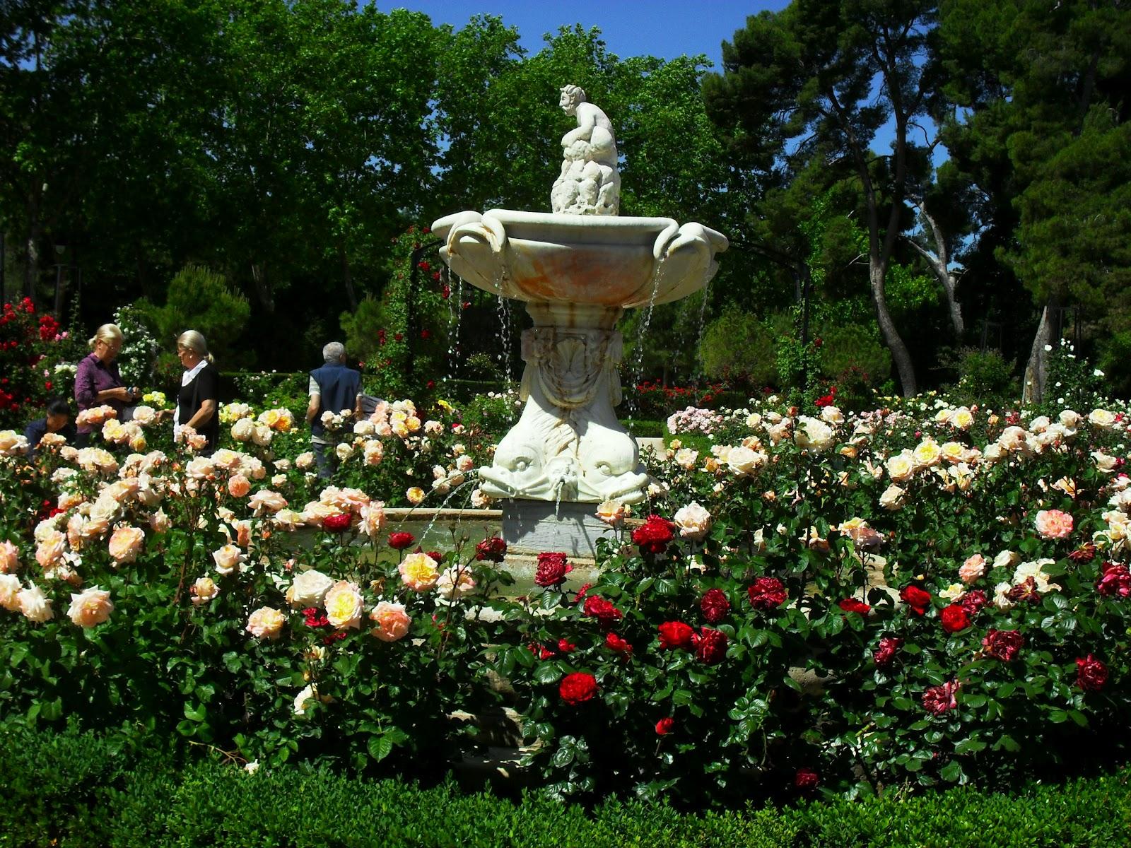 Tipos de rosales vivero en onil centro de jardiner a for Jardineria rosales