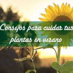 Consejos para cuidar las plantas en verano