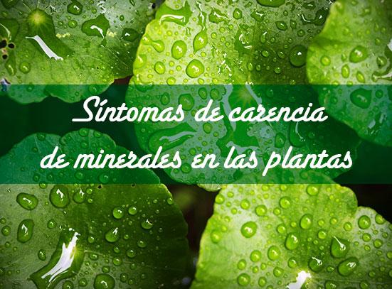 Síntomas de carencias de minerales en las plantas