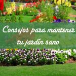Consejos para mantener tu jardín sano