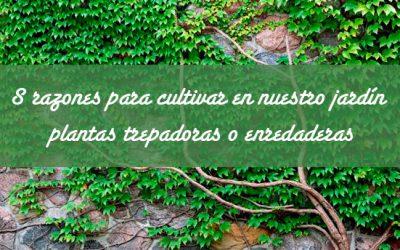 8 Razones para cultivar en nuestro jardín plantas trepadoras o enreda